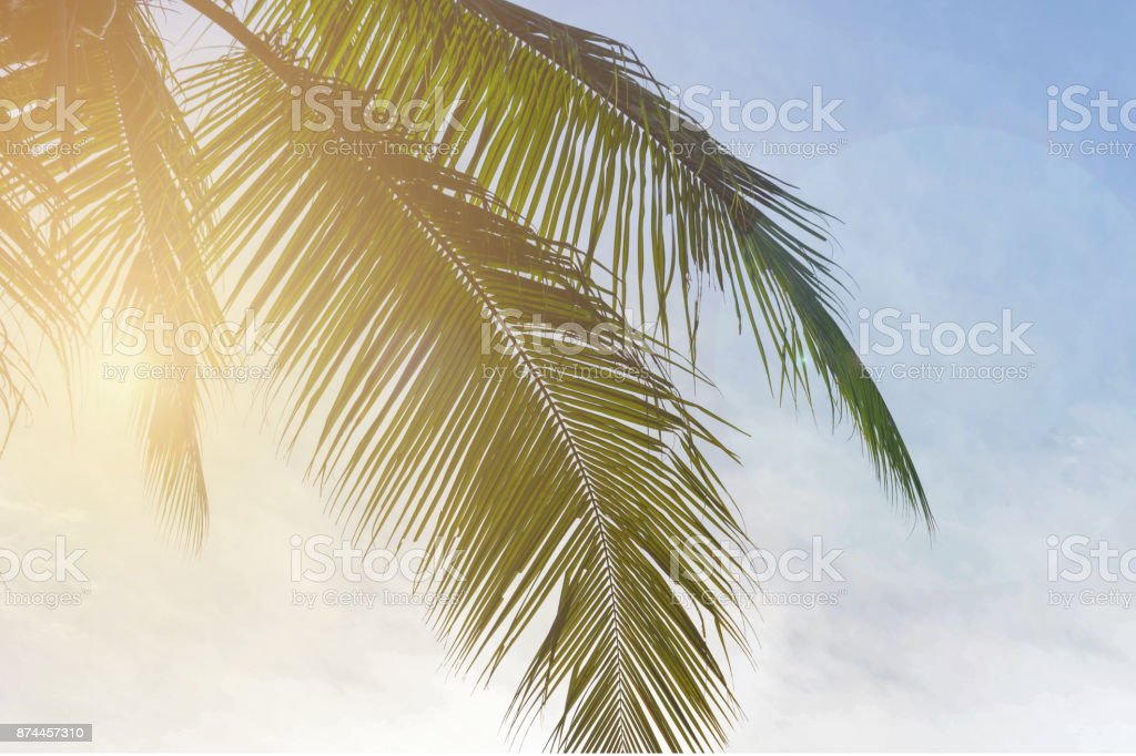 Coconut palm tree on sky background with soft light, Low Angle View. stock photo