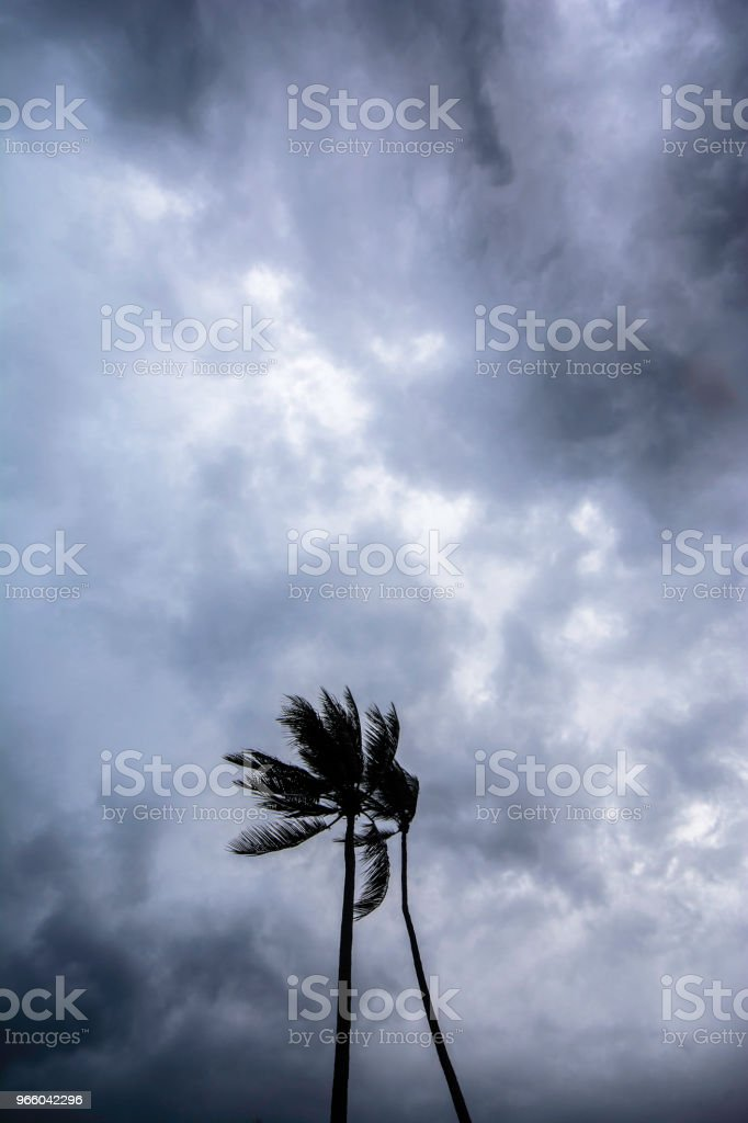Coconut palm tree on storm day - Стоковые фото Азия роялти-фри