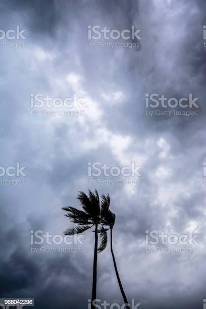 Кокосовая Пальма В День Шторма — стоковые фотографии и другие картинки Азия