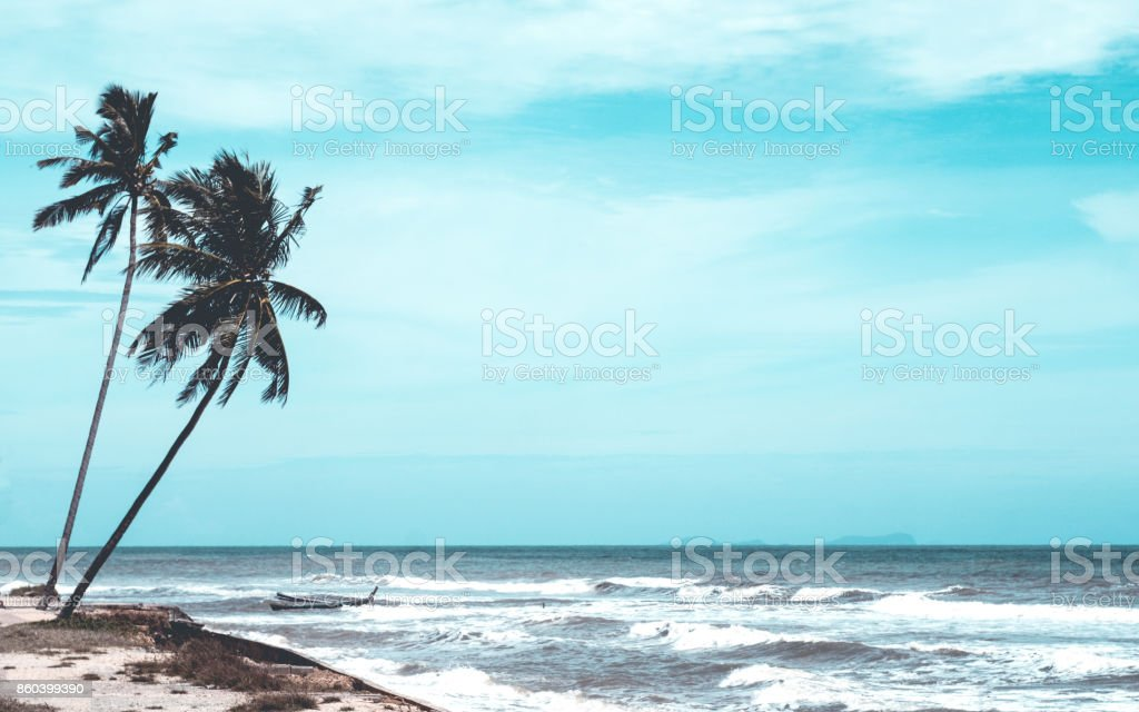 Coconut Palm Tree on Tropical Beach stock photo