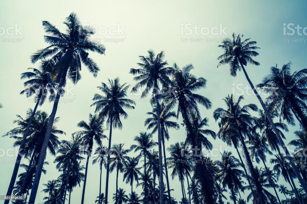 Hindistan cevizi hurma ağacı - Royalty-free Ağaç Stok görsel