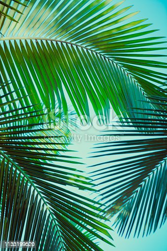 Coconut palm tree under blue sky. Vintage background. Travel card. Retro toned. Soft focus