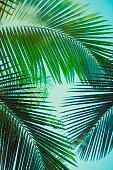 Coconut palm tree under blue sky. Vintage background. Travel card. Retro toned. Soft focus