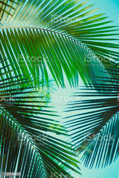 Photo of Coconut palm tree under blue sky. Vintage background. Retro toned poster.