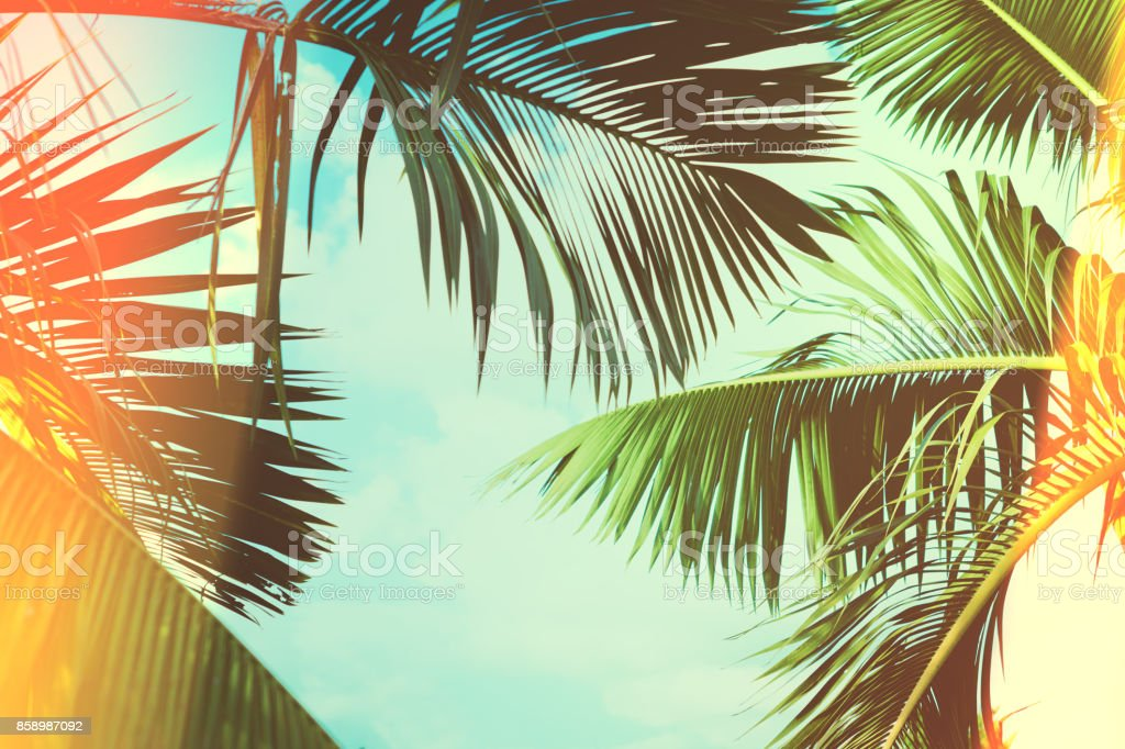 Coconut palm tree under blue sky. Vintage background. Travel card. Vintage effect