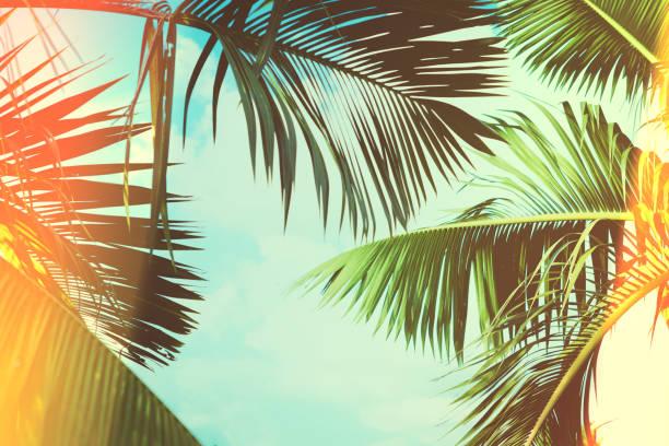 Coconut palm tree under blue sky vintage background travel card picture id858987092?b=1&k=6&m=858987092&s=612x612&w=0&h=njru15psf4 jgudlqoidt0h2trkl itvioj3o9835gy=