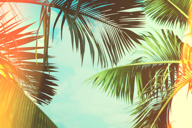 Coconut palm tree under blue sky. Vintage background. Travel card. Vintage effect stock photo