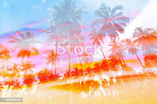 Coconut palm tree with vintage effect for background