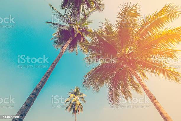 Coconut palm tree with vintage effect picture id514520888?b=1&k=6&m=514520888&s=612x612&h=mqo4xes97py6oa1s apbau0dcj ykjcvefwjruupcfe=