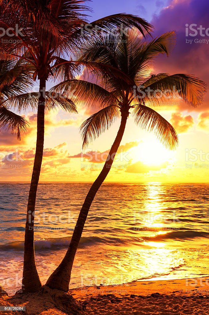 Coconut palm trees against colorful sunset stock photo