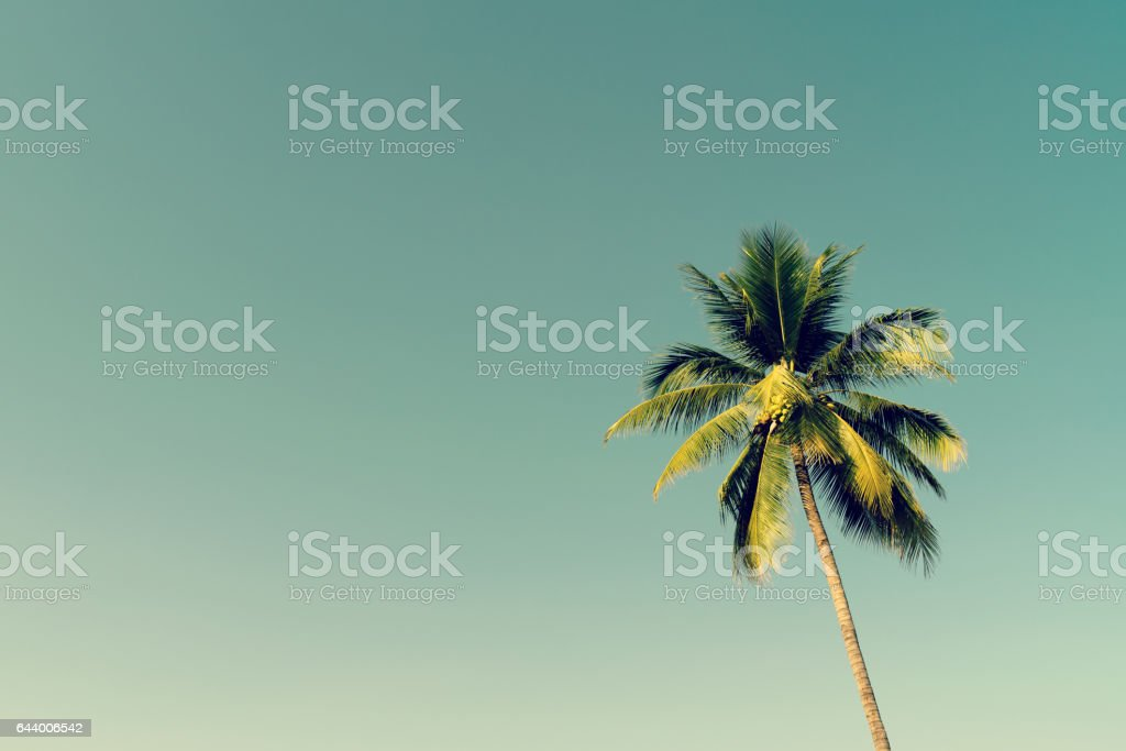 Coconut palm trees and shining sun with vintage effect. stock photo