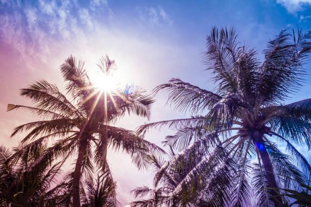 Coconut Palm Trees and Sunburst, Ko Lanta, Krabi, Thailand stock photo