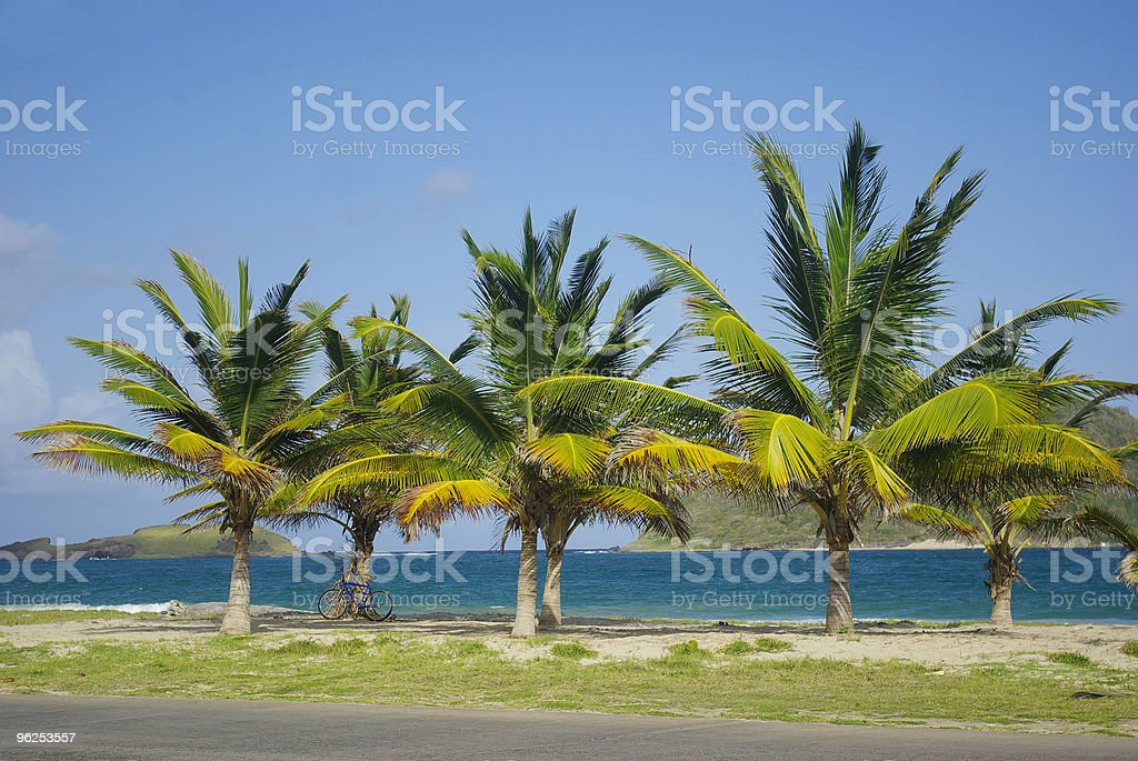 coconut palm trees and tropical beach royalty-free stock photo