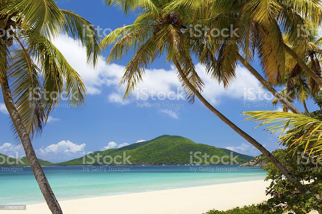 coconut palm trees at a tropical beach in Virgin Islands stock photo