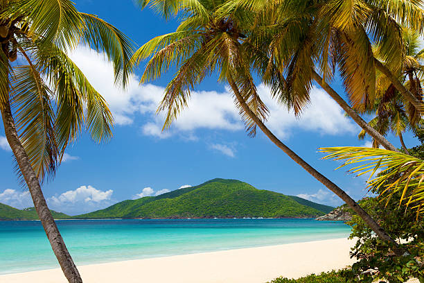 coconut palm trees at a tropical beach in Virgin Islands