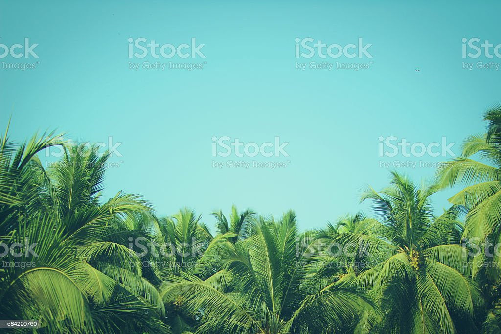 Coconut palm trees at tropical beach vintage filter stock photo