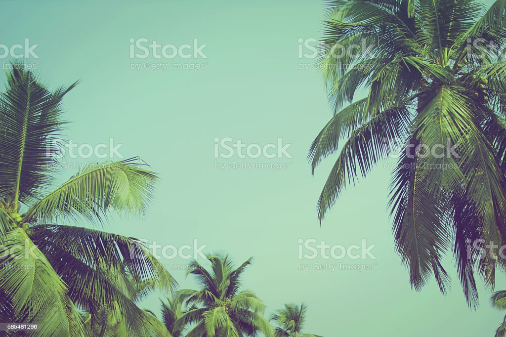 Coconut palm trees at tropical beach vintage filter - foto de stock