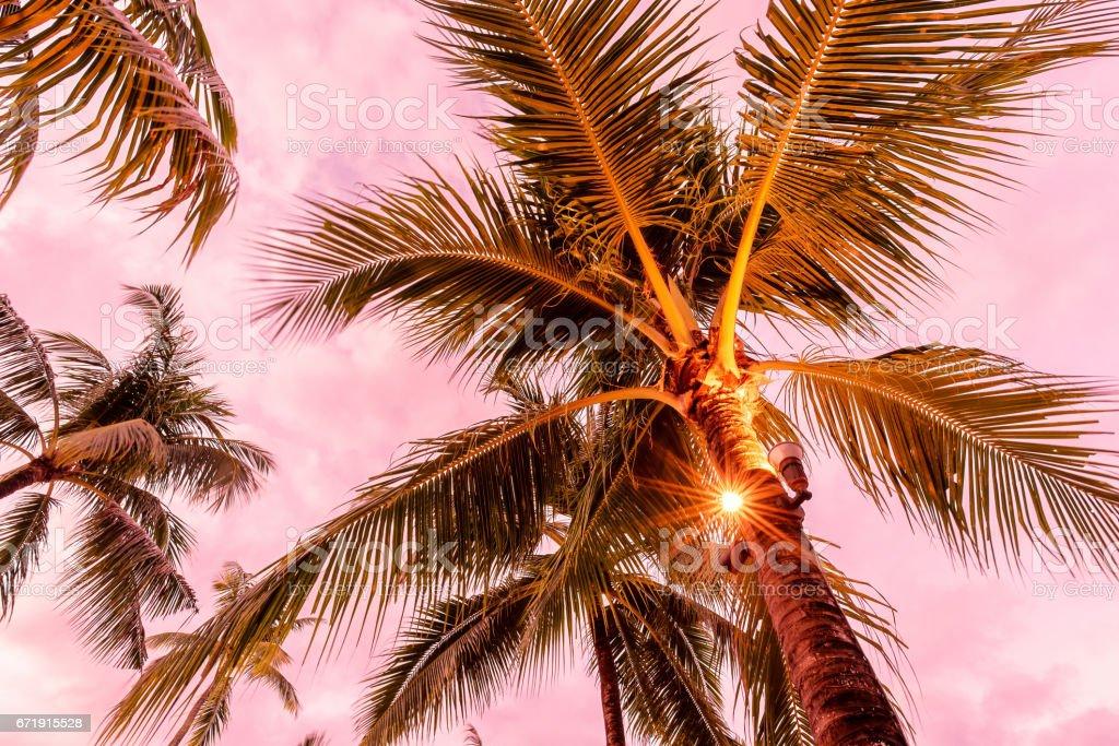 Coconut palm trees illumination stock photo