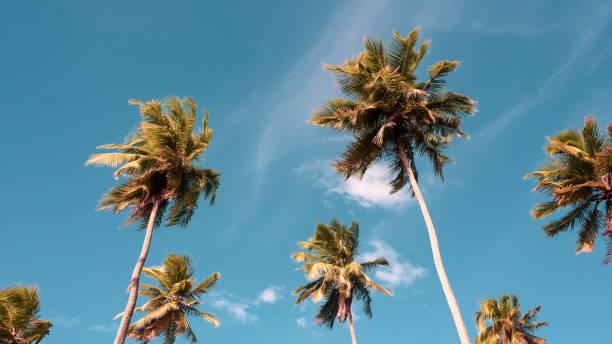 Kokospalmen am Strand von Paiva Reserve – Foto