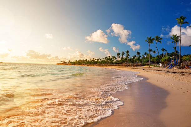 Kokosnuss-Palmen auf farbenfrohen Sonnenuntergang – Foto