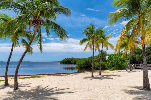 Coconut palm trees on sandy beach picture id1165083109?b=1&k=6&m=1165083109&s=612x612&w=0&h=y5cs8dsyqrg9roasva2kqd9lsh3 90qbss mwpi9jnw=