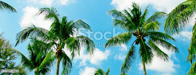 istock coconut Palm trees on the blue sky 930095154