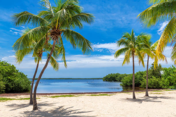 Coconut palm trees on tropical beach stock photo