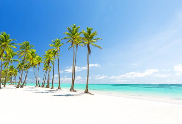 Coconut Palm trees on white sandy beach in Punta Cana, Dominican Republic Beautiful tropical white beach and coconut palm trees. Holiday and vacation concept. beach stock pictures, royalty-free photos & images