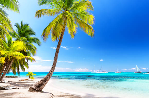 Kokosnuss Palmen am weißen Sandstrand – Foto