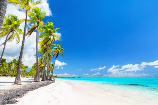Kokospalmen am weißen Sandstrand. – Foto