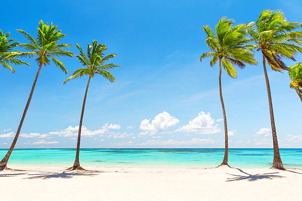 Royalty free palm tree pictures images and stock photos istock coconut palm trees on white sandy beach stock photo voltagebd Image collections