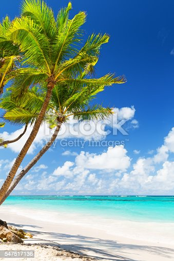 istock Coconut Palm trees on white sandy beach 547517136