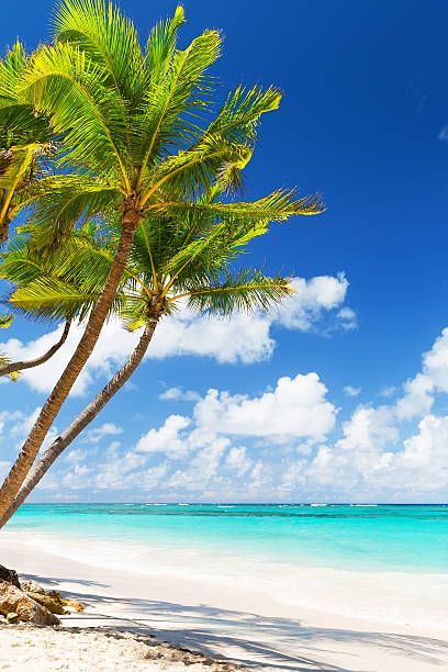 coconut palm trees on white sandy beach - vertical stock pictures, royalty-free photos & images