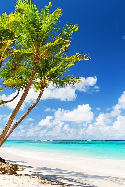 palme di cocco sulla spiaggia di sabbia bianca - composizione verticale foto e immagini stock
