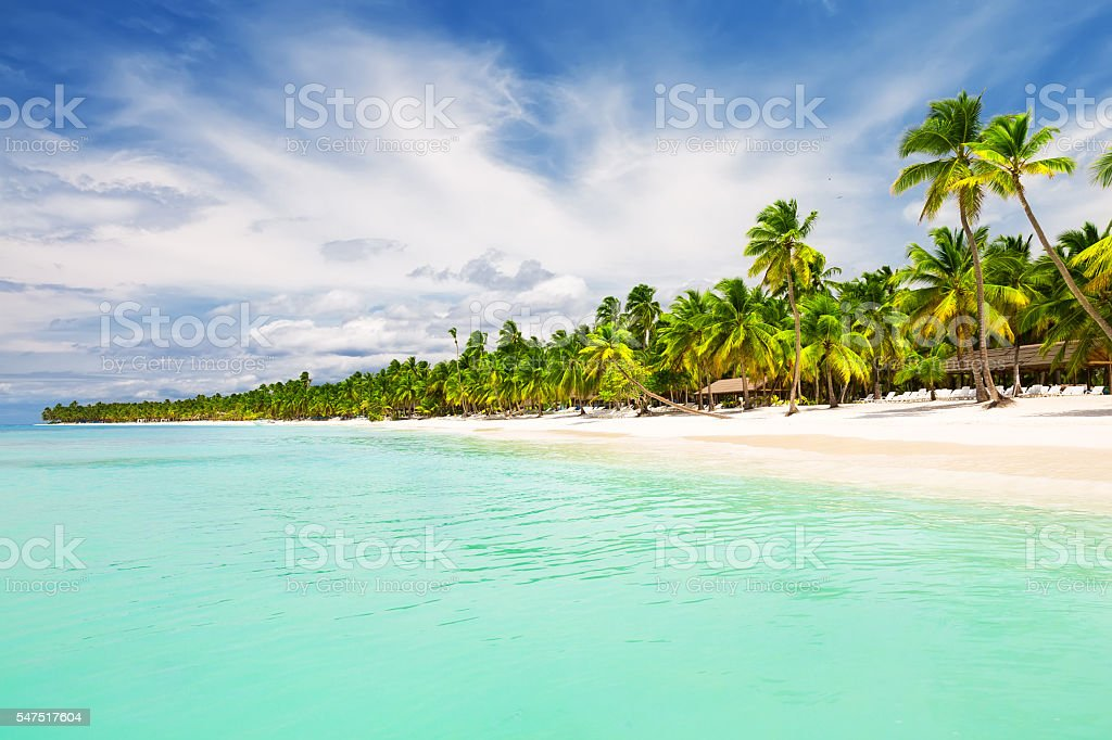 Coconut Palm trees on white sandy beach stock photo
