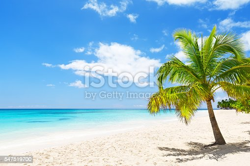 istock Coconut Palm trees on white sandy beach 547519700