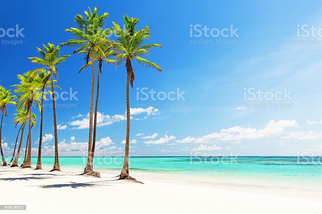 Coconut Palm trees on white sandy beach​​​ foto