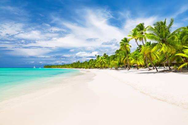 Kokospalme Bäume auf weiß Sandstrand – Foto