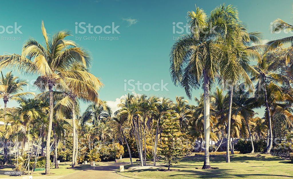 Coconut palm trees over blue sky background, toned photo with filter...