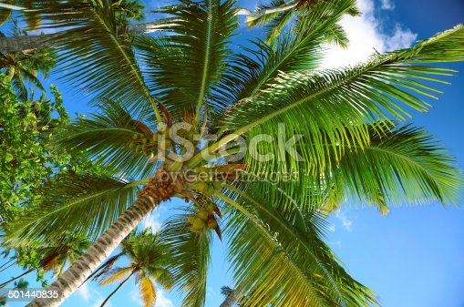 1145102719istockphoto Coconut palm trees perspective view 501440835