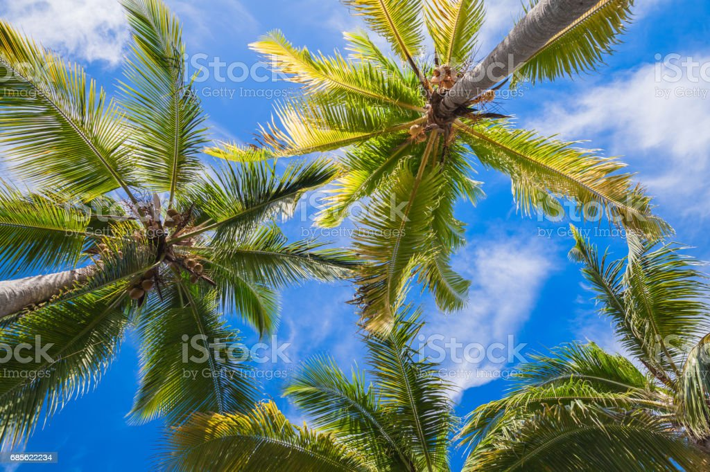 Coconut palm trees under blue sky background 免版稅 stock photo