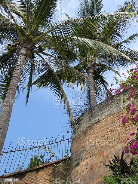 Coconut palms and brick wall