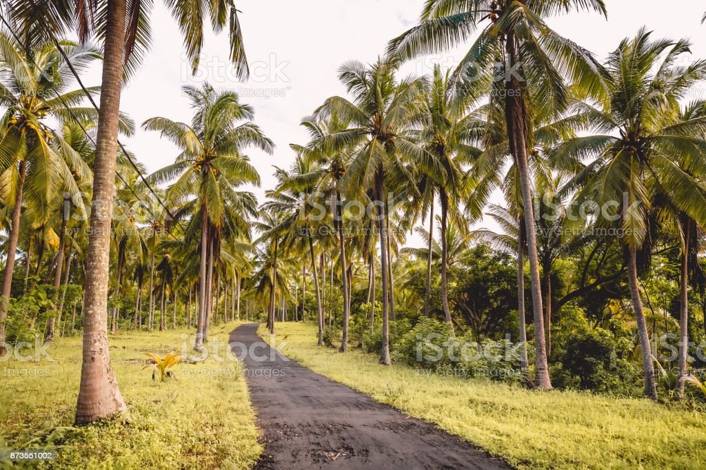 Coconut palms and road in tropical island stock photo