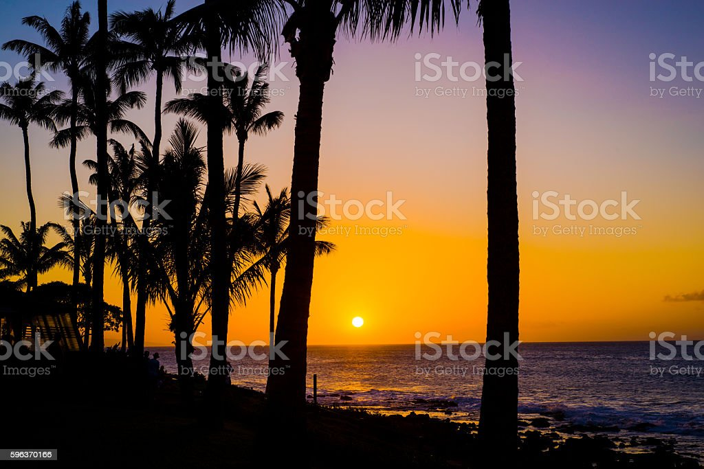 coconut palms, golden maui sunset stock photo