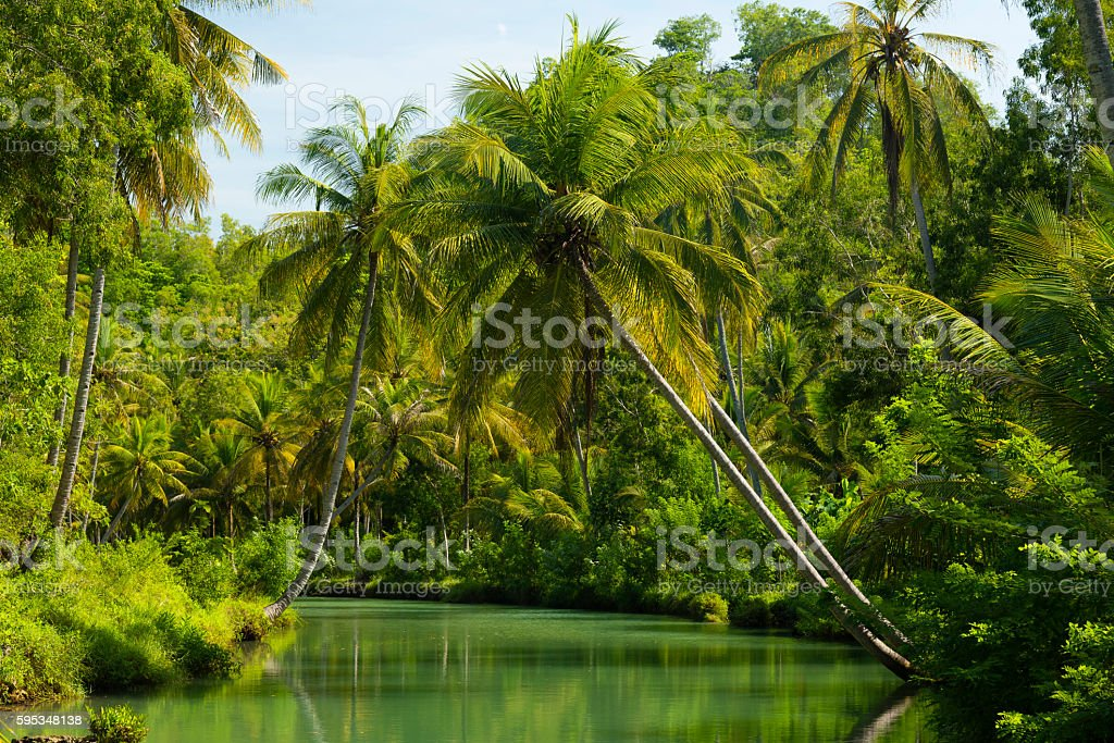 Coconut palms of Indonesia stock photo