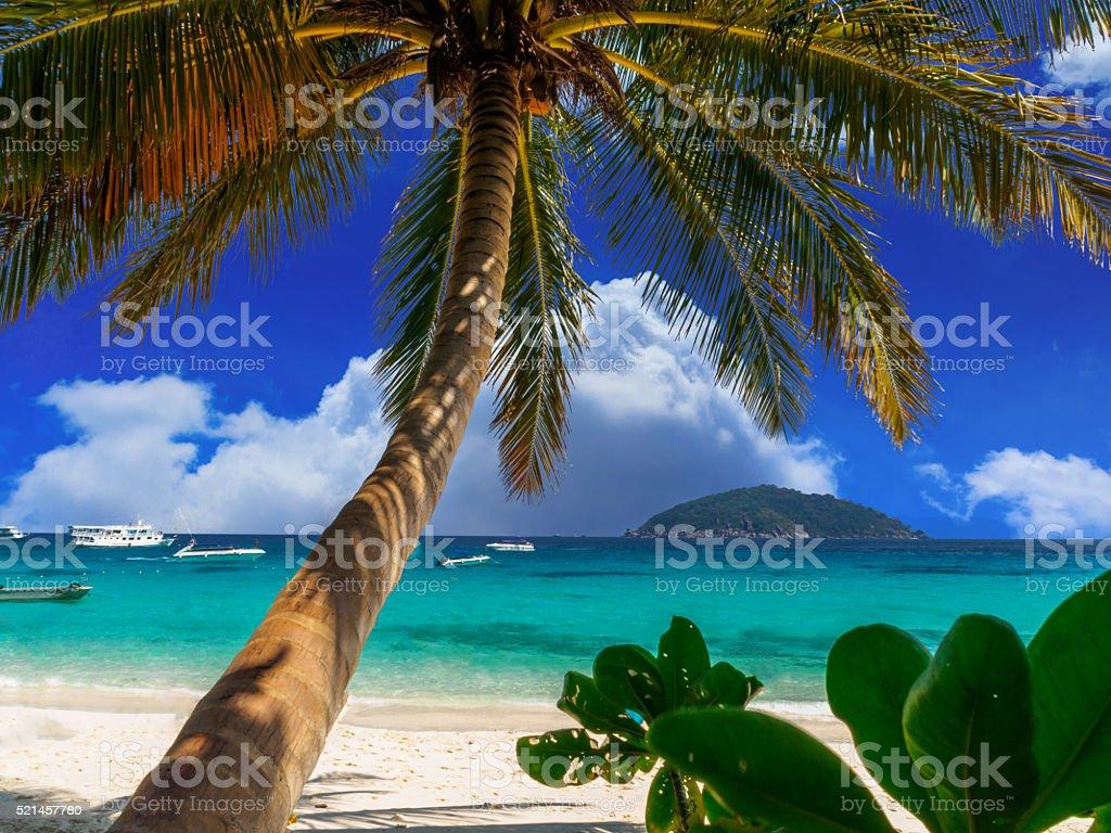 Coconut palms on similan island stock photo