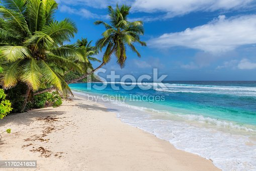 Tropical beach. Coconut palms on sunny beach and turquoise sea.  Summer vacation and tropical beach concept.