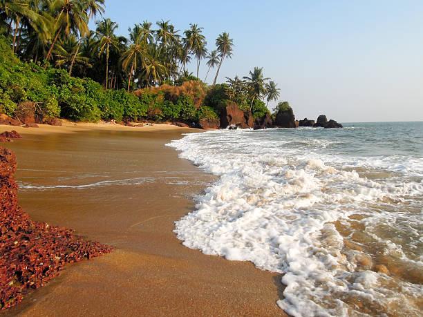 Coconut palms on the beach near the village of Thottada stock photo