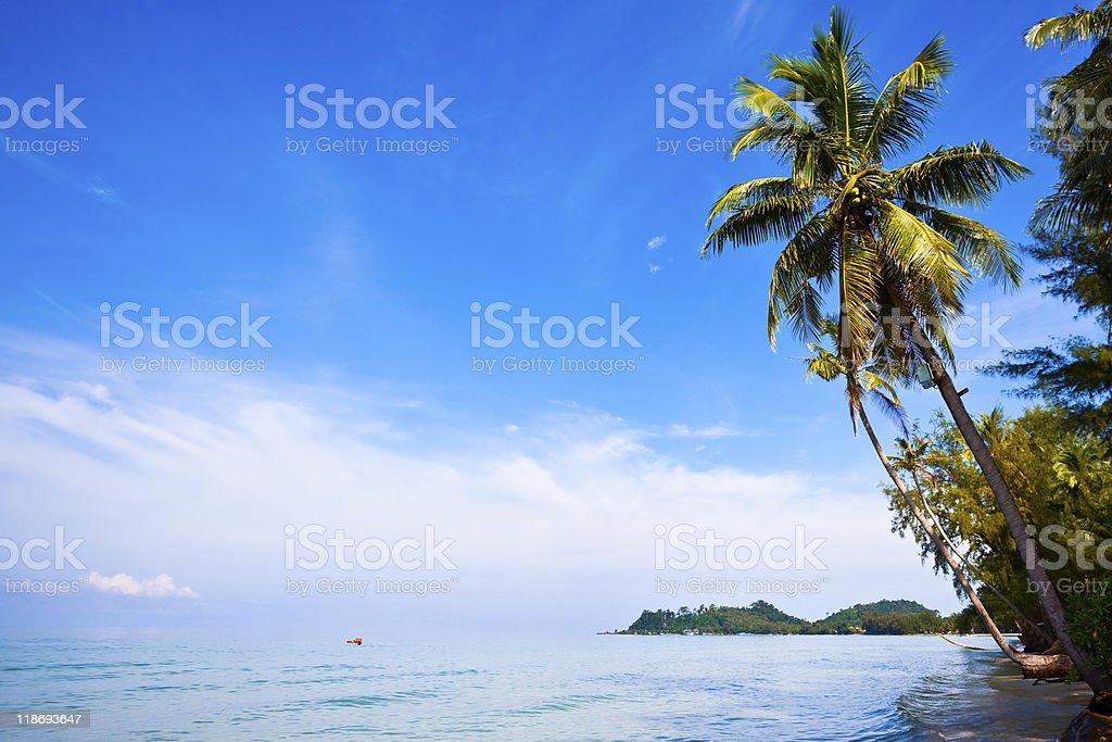 Coconut palms on tropic coast royalty-free stock photo