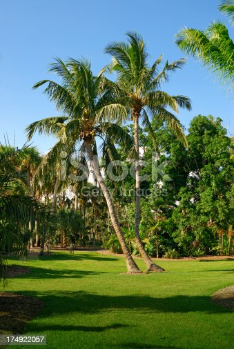 coconut palms in a public miami park